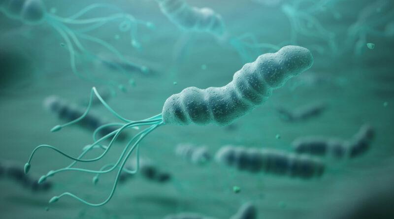 Unife indaga sugli spostamenti dei Sapiens grazie all'analisi genetica di un batterio